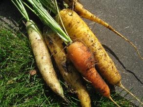 Really fresh carrots