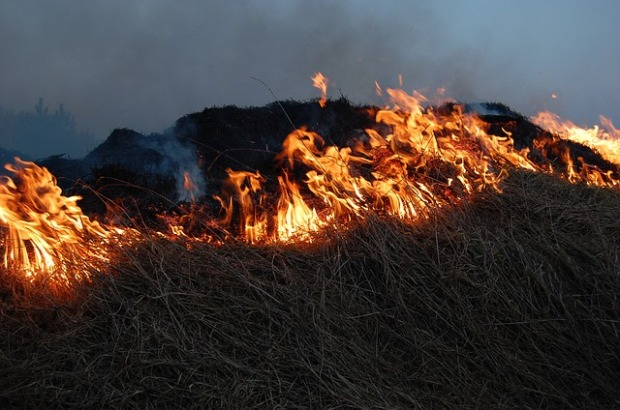 Burning pine straw