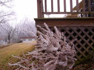 Frost Blown onto Perilla