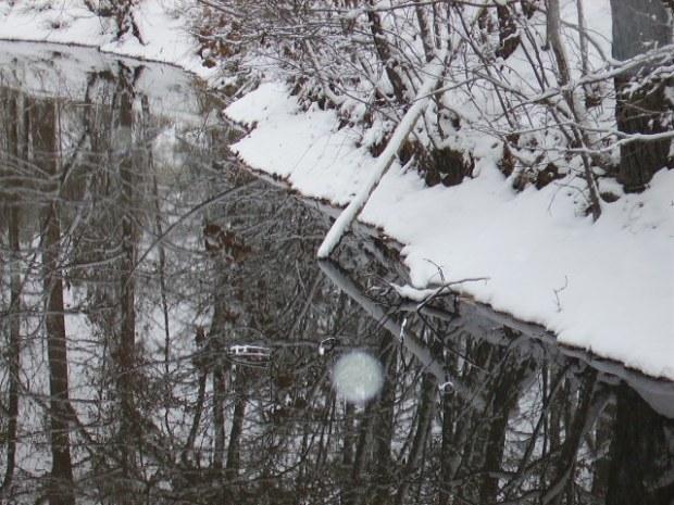 Pond boundary with debris