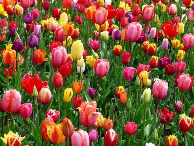 Spring flowers bring spring pollen