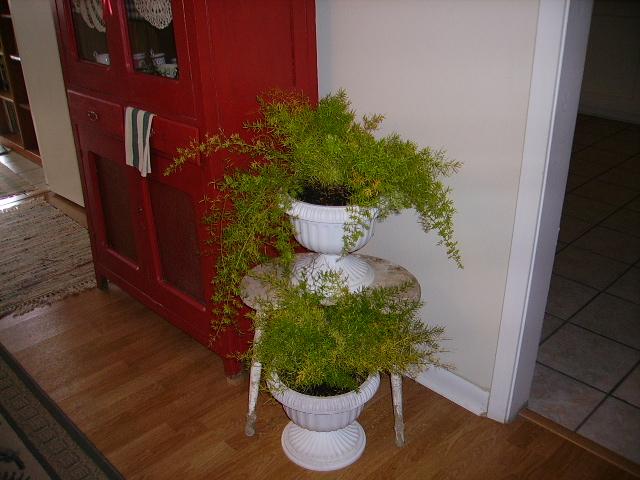 homegrown ferns