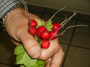 radish bouquet