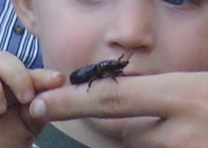 boy and bug