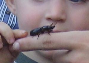 boy and bug