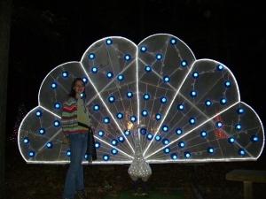 light peacock