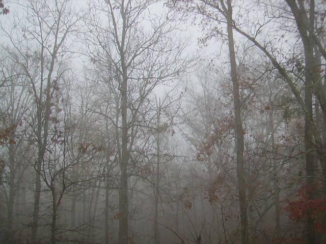 This Present Fog (1/2)
