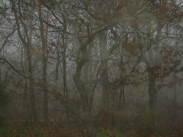 This Present Fog (2/2)