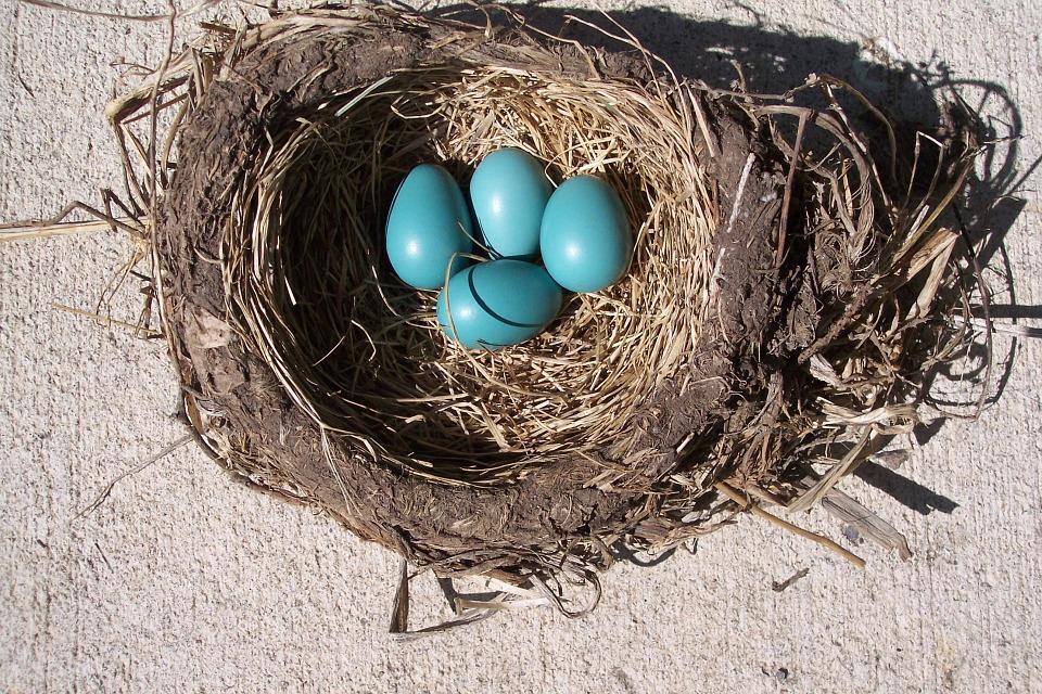 egg-314365_960_720