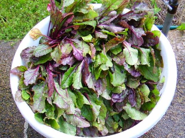 fresh beet greens