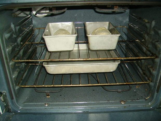 Loaves ready to rise in cold oven, over pan of hot water.