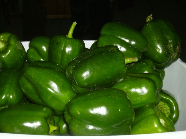 Bell pepper harvest