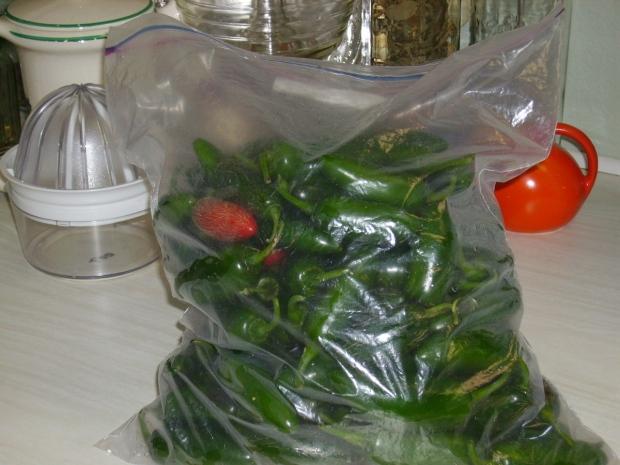 Jalapeno pepper harvest