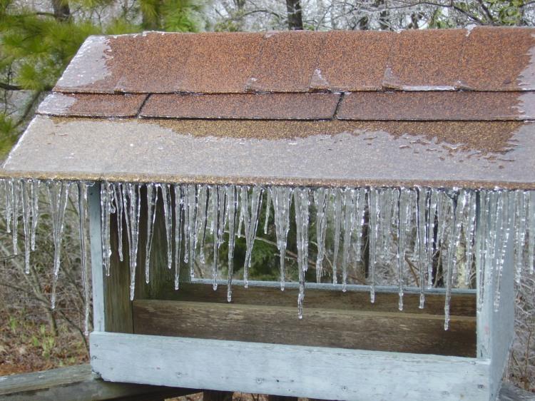 Birdfeeder Covered in Ice by Winter Storm Octavia