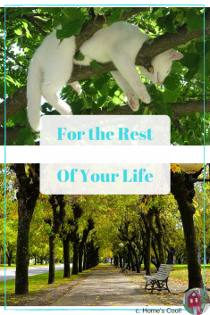 How to Get an Amazing Rest from a Crazy Busy Day